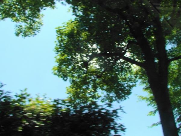 Kisei666